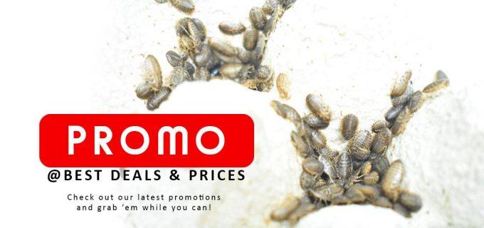 Promo Dubia Roaches Malaysia